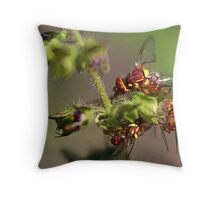Smallest Bee Ever? No, Fruit Fly Throw Pillow