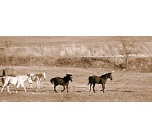 Country Livin' Photographic Print