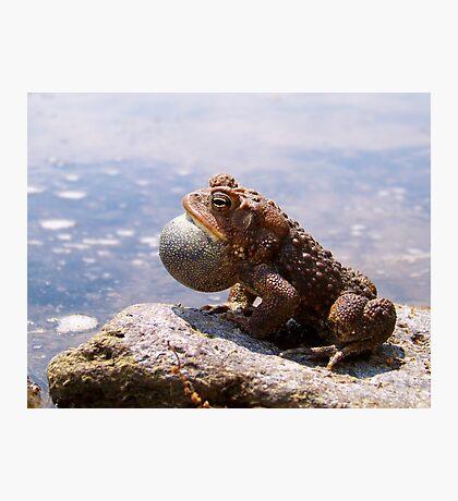 Mating Call Photographic Print