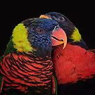 Lorikeets by caroleann1947