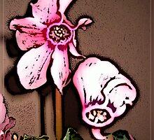 Cyclamen Whimsy by Ladydi