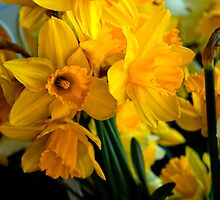 Daffs by Simon Duckworth