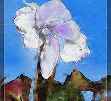 Cyclamen White on Blue by Ladydi