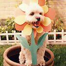 My Flower by yvonne willemsen