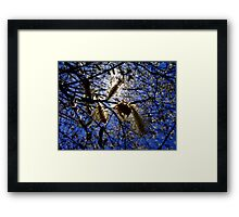 Pussy Willows Framed Print