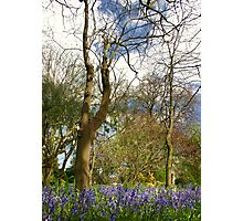 Blue 'n' woody Photographic Print