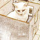 White Box Duty by hickerson