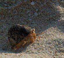 Hermit crab by presbi