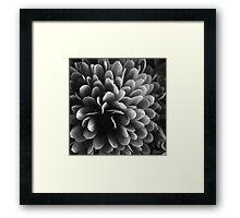 Chrysanthemum #1 Framed Print