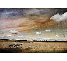 Two Cranes Photographic Print