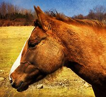 Chestnut Horse by SRowe Art