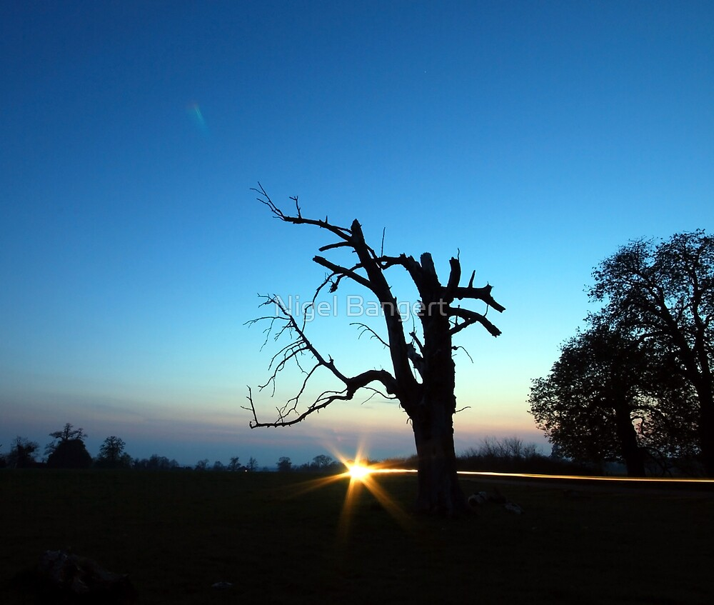 Dead Tree Sunset by Nigel Bangert