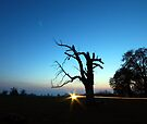Dead Tree Sunset by Nigel Bangert