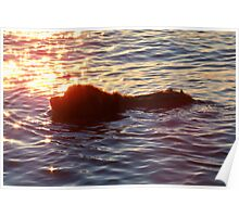 Swimming Through the Sunset Poster