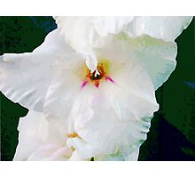 Flowers are Best Photographic Print