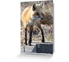 What a sporty little vixen Greeting Card