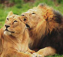 Wild Love II by Franco De Luca Calce