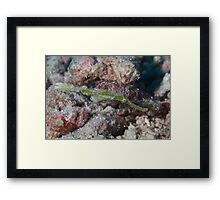 Ghost Pipefish Framed Print