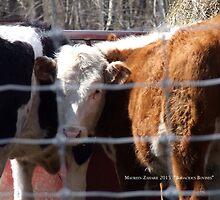 Bodacious Bovines by Maureen Zaharie