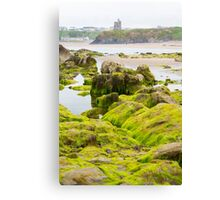 ballybunion castle algae covered rocks view Canvas Print