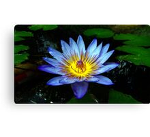 Water Lilly Two Canvas Print
