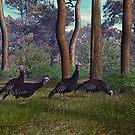 Florida Turkey (female) by Walter Colvin