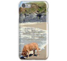 wild atlantic way castle and dog iPhone Case/Skin