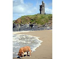 wild atlantic way castle and dog Photographic Print