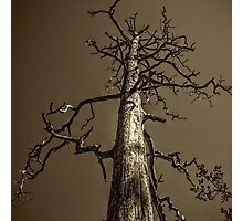 Dead Tree Near Sedona Arizona Photographic Print