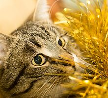 Tabby Cat and Yellow Tinsel 6 by AnnArtshock