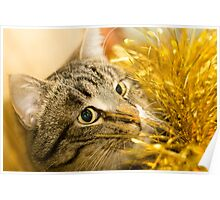 Tabby Cat and Yellow Tinsel 6 Poster
