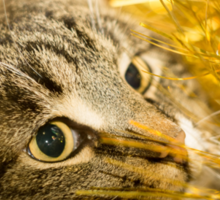 Tabby Cat and Yellow Tinsel 6 Sticker