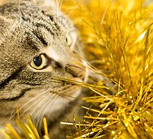 Tabby Cat and Yellow Tinsel 7 by AnnArtshock
