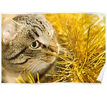 Tabby Cat and Yellow Tinsel 7 Poster