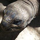 Giant Tortoise by heyitsmefi