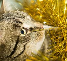 Tabby Cat and Yellow Tinsel 8 by AnnArtshock