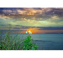 yellow sunset over loop head with thistles Photographic Print