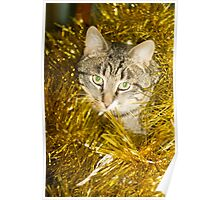 Tabby Cat and Yellow Tinsel 9 Poster