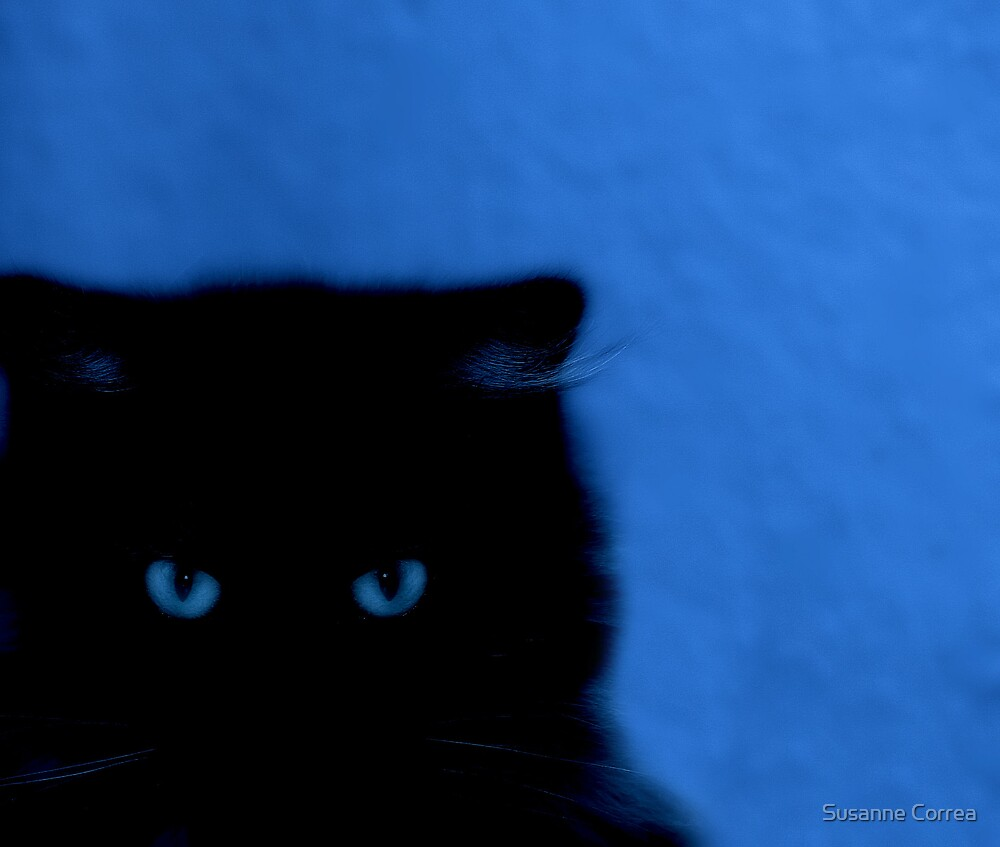 kitty at night by Susanne Correa