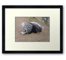 Quills: Not For Writing With Framed Print