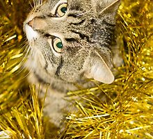 Tabby Cat and Yellow Tinsel 10 by AnnArtshock