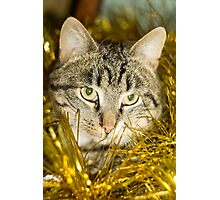 Tabby Cat and Yellow Tinsel 11 Photographic Print