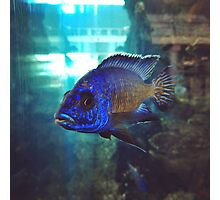 Colorful Fish in the Ferry Aquarium Photographic Print