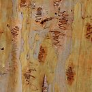 Scribbly Gum 4 by Martin How