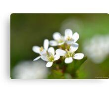 Tiny Macro Flowers Canvas Print