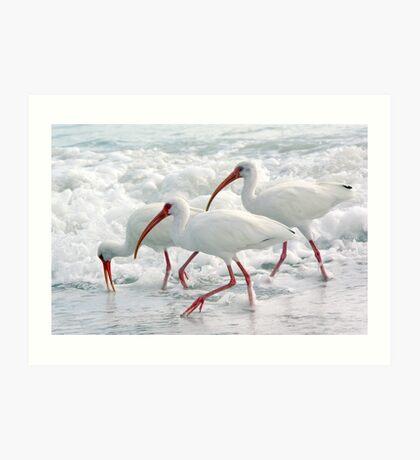 White Ibis in Foam Art Print