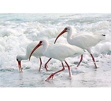 White Ibis in Foam Photographic Print