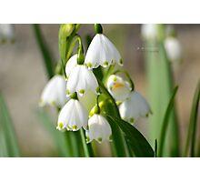 """ Spring Snowflake "" Photographic Print"