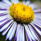 Wildflower 3 by steini