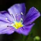Wildflower 4 by steini